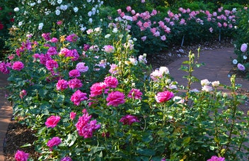 Rose Mary Haggar Garden Dallas