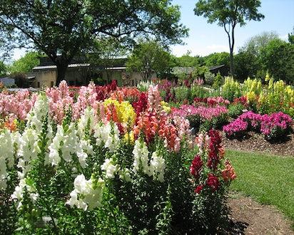 The Trial Gardens Dallas Arboretum And Botanical Garden
