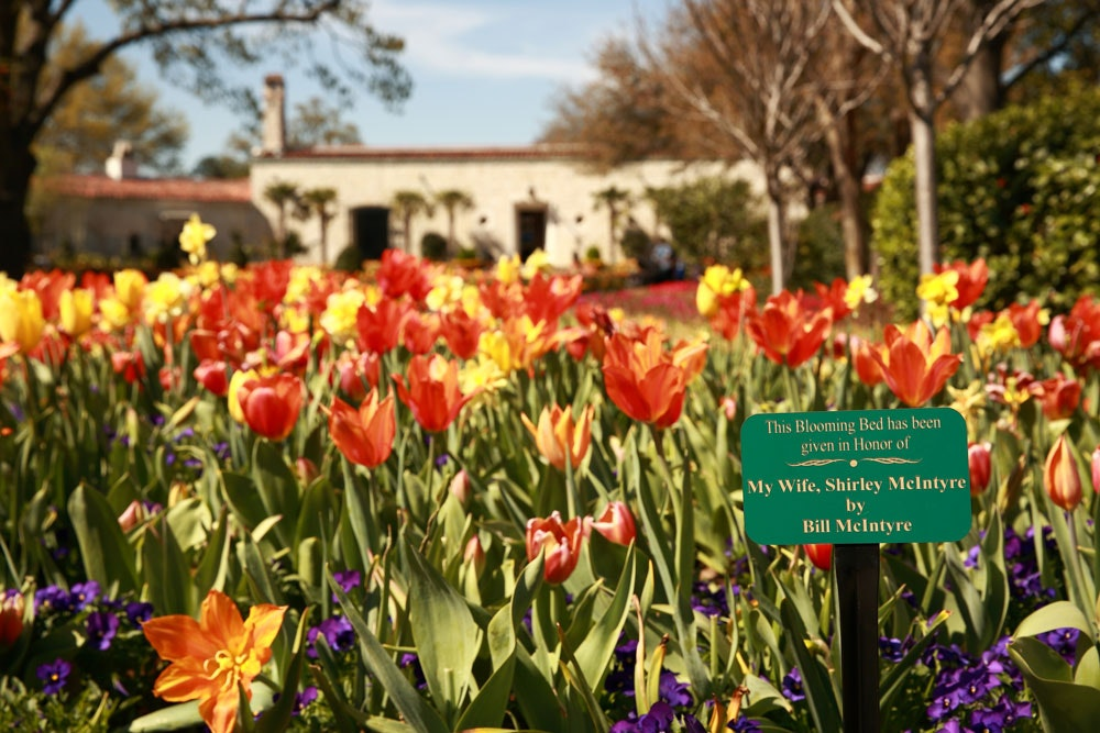 Sponsor A Blooming Bed At The Dallas Arboretum