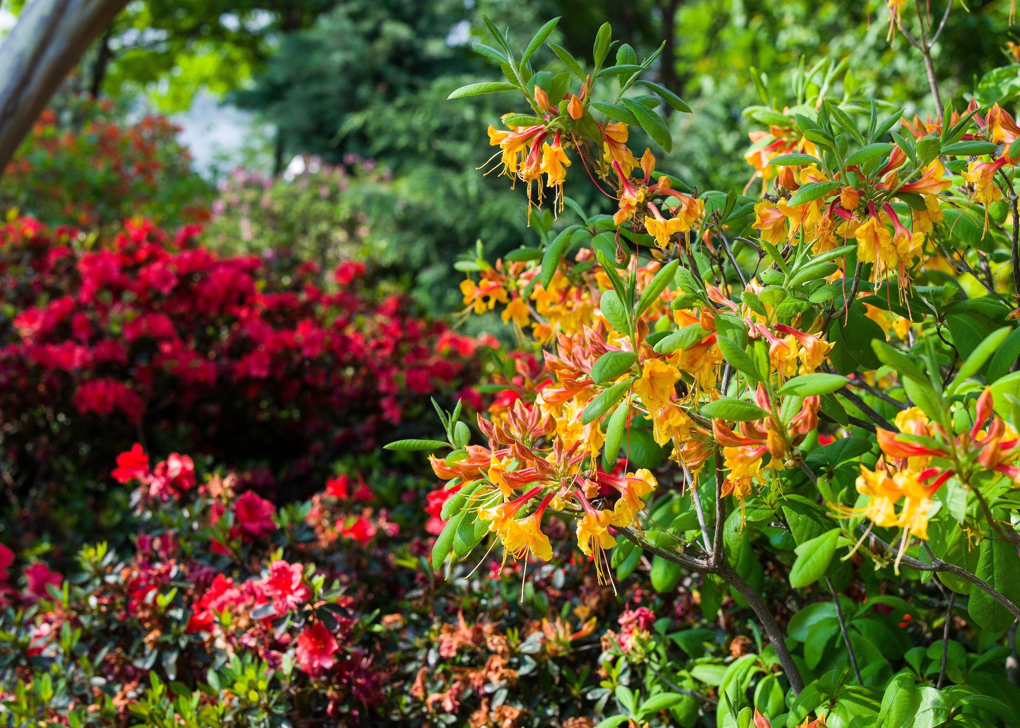 Gardening Resources And Tips Dallas Arboretum And Botanical Garden