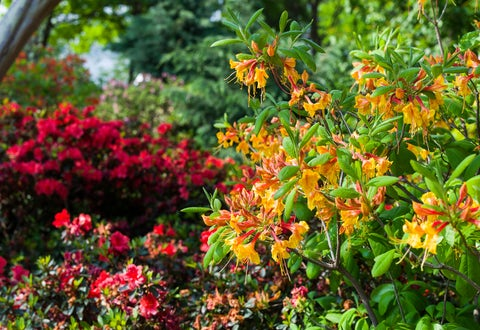 Gardening Resources and Tips | Dallas Arboretum and